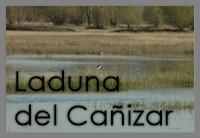 Laguna del Cañizar